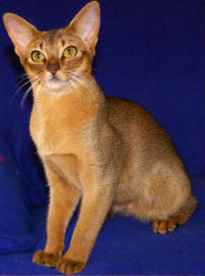 Cat Breed Pictures