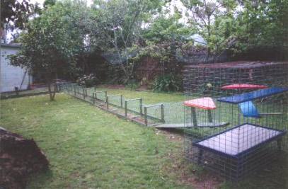How To Make C Cheap Srtray Cat Cage