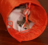 Cat Tunnels are fun