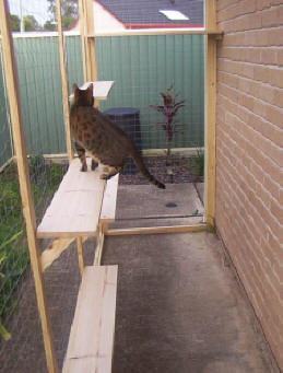 Cat Enclosures Outdoor Cat Runs Many Cat Enclosure