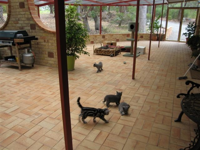Cost To Build A Cat Sanctuary