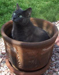 Stop The Cat Peeing In Your Potted Plants