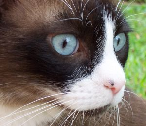 Cat Death Amp Euthanasia Help With Coping With Your Loss