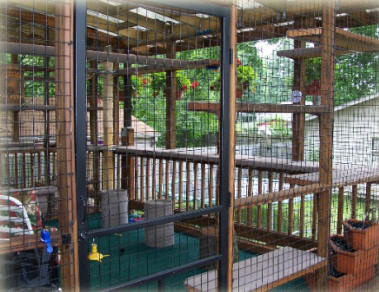 Cat Enclosures and Outdoor Cat Runs Cat Proof Fencing,