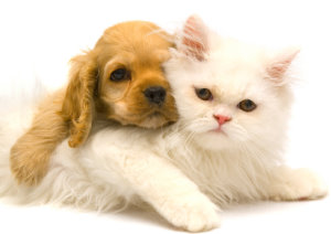 Get Rid of Fleas from House and Dogs and Cats