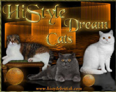 HiStyle British Shorthair Cats