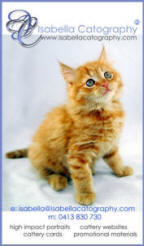 Ginger Kitten Isabella Catography