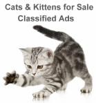 classified ads Cats