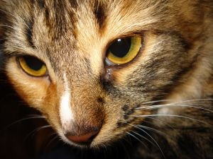 Kidney Failure In Cats Symptoms And Treatment
