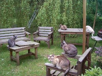 Cat Enclosures Outdoor Cat Runs Many Cat Enclosure Pictures